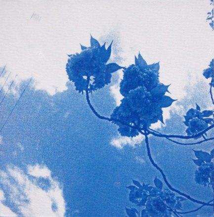 Fleur du ciel, dans mon jardin, 15x15