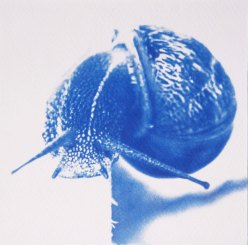 La cagouille, escargot du jardin, 15x15