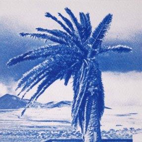 Palmier décoiffé, Lanzarote, 15x15
