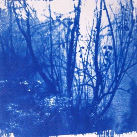 Eden, reflet d'arbres, 15x15